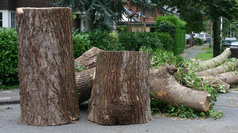 Boomverzorging Hasenaar - Innemen houtachtige materialen 4.4 - Stamhout 3