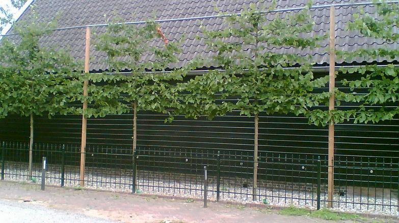 Boomverzorging Hasenaar - Aanplanten Verplanten 1.1 - Aanplanten 1