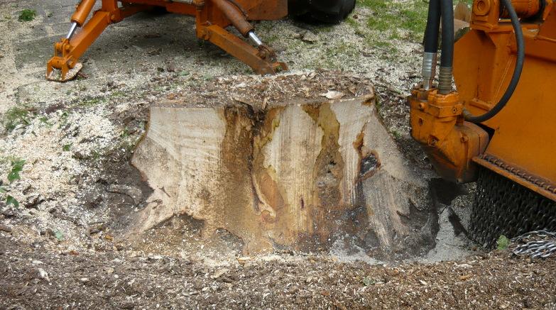 Boomverzorging Hasenaar - Verwijderen boomstobben 3.3 - Stobbenfrezen 3