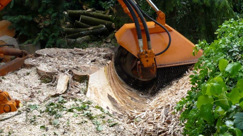 Boomverzorging Hasenaar - Verwijderen boomstobben 1.3 - Stobbenfrezen 1
